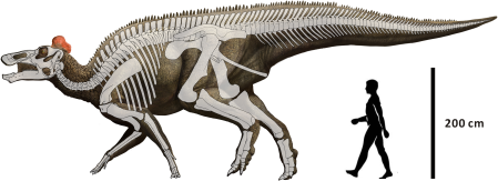 A skeleton superimposed on an Edmontosaurus body, with a human for scale