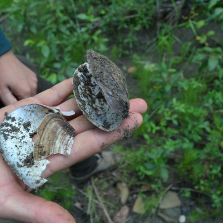 Dustin holds freshwater mussels in his hand