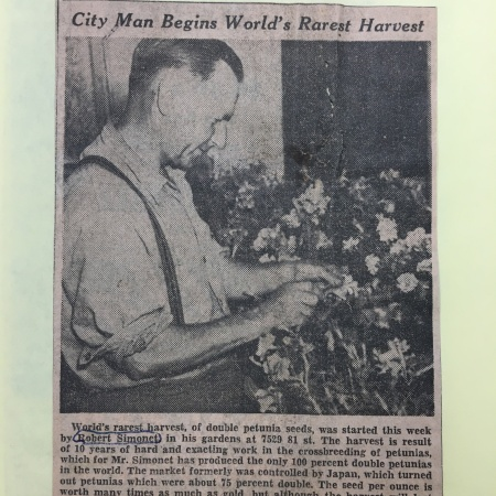 "An Edmonton Journal article with the headline ""City Man Begins World's Rarest Harvest"""